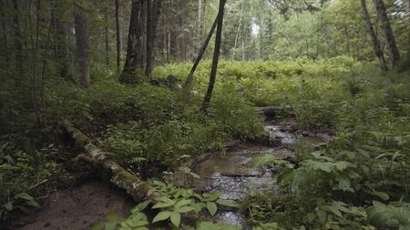 Natural landscape of the stream flowing in summer forest with green leaves and many flying insects. Stock footage. The picturesque colorful view of the woods and a cloud of gnats.
