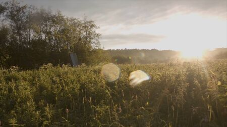 Beautiful view of field with tall wild grass in sunlight. Stock footage. Bright sunlight falls beautifully on green grassy meadow on background of trees Stockfoto