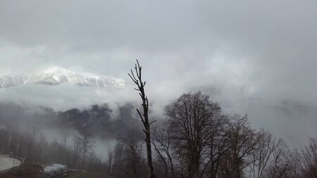 Beautiful winter landscape with snow covered mountain peak shrouded in mist. Stock footgae. Mystical snowy mountain covered by fog and bald trees.