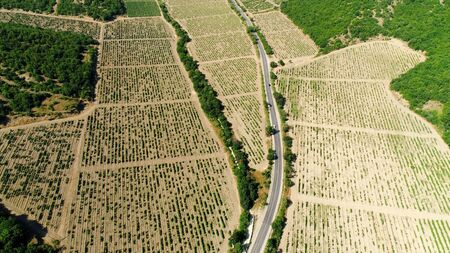 Top view of agricultural fields under seedlings. Shot. Large fields for sowing crops