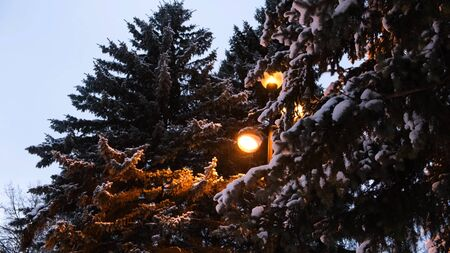 View of the snow-covered winter Park with a lantern. Concept. Beautiful pine trees and lantern in the Park in winter.