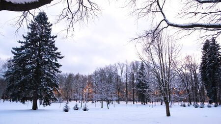 View of the snow-covered winter Park with a lanterns. Concept. Beautiful pine trees and lanterns in the Park in winter.