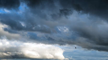A bird flying against stormy clouds on a summer day. Concept. Bottom view of heavy beautiful clouds flowing in the blue sky before the storm or rain.