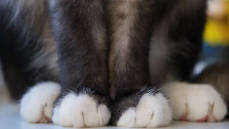 Black and white paws of cat. Concept. Close-up of beautiful white paws of black cat sitting by window. Cute white paws of black cat