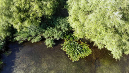 Aerial view of a green pond with bushes and green water lilies. Clip. Top view of summer natural landscape with green moss, vegetation on small lake.