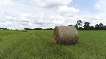 Big hay bale rolls on a green field with blue sky and clouds on the background. Shot. Rural landscape with mowed grass in rolls surrounded by green trees. Stok Fotoğraf