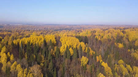 Colourful autumn forest, view form above captured with a drone. Clip. Sunny breathtaking landscape of mixed forest in green and yellow colors.