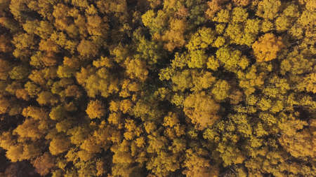 Amazing autumn of the golden forest against the backdrop of blue sky. Clip. Nature Reserve, giant natural park of mixed coniferous and deciduous forest.