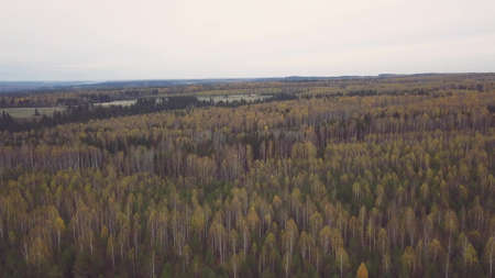 Breathtaking panoramic aerial view of colorful green, orange and yellow trees in a mixed forest. Clip. Autumn landscape with national park, mixed deciduous and coniferous forest. Stock fotó