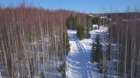 Aerial view of a wide snow covered path among bald grove of birch trees and rare green spruces. Clip. Winter natural landscape of an empty road, forested hills and blue sky.