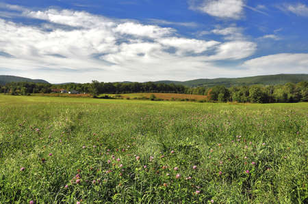Green field Landscape with a kind on a farm Stock Photo - 9171672