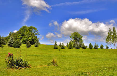Summer landscape, green grass the blue sky, beauty photo
