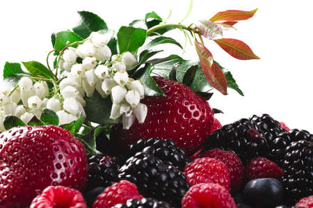Berries a strawberry a raspberry a bilberry a blackberry and a blossoming branch