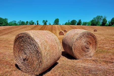 haymaking: Haystacks in the field after a haymaking Stock Photo