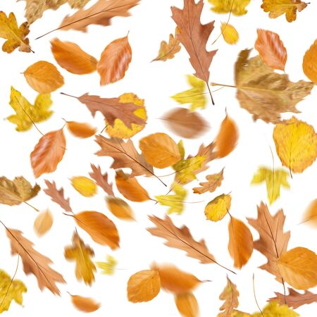Collection beautiful colorful different autumn leaves, blowing through the air isolated on white background, autumn concept backgrounds, autumn sale, Stockfoto