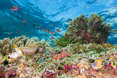 Underwater Scene with Crystal Clear Blue Water Archivio Fotografico