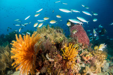 Underwater Scene with Coral and Fish Stock Photo