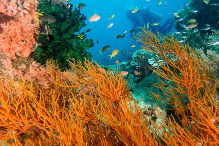 Underwater Scene of Coral Stock Photo