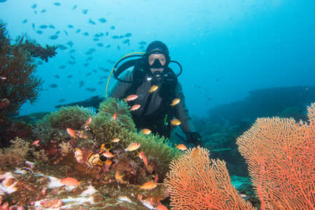 Underwater Scene with a Diver Behind Coral Stock Photo