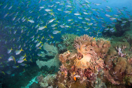 Underwater Scenic Landscape with Coral and Fish