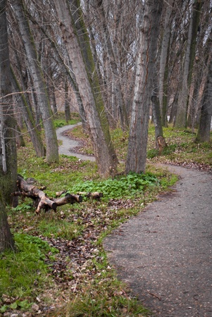 sinuous: Sinuous path at riverside and a big amount of trees