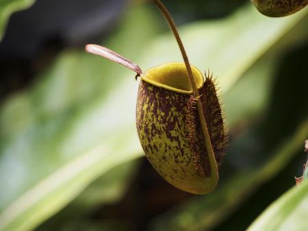 entrap: Carnivorous plant