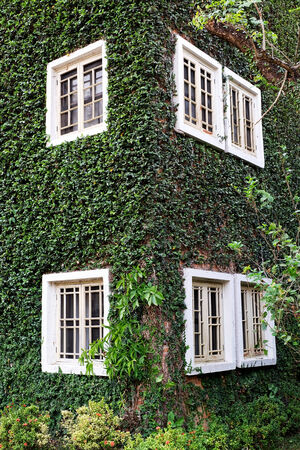 wooden Window on the green wall