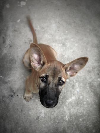 ojos tristes: Hogar para perros