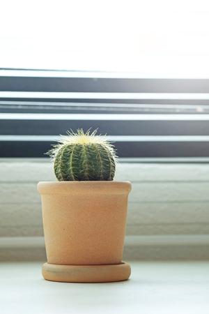 Window decoration with Cactus photo