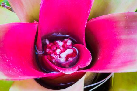treetop: Bromeliad treetop