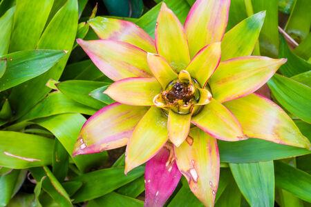 bromeliad: Bromeliad treetop