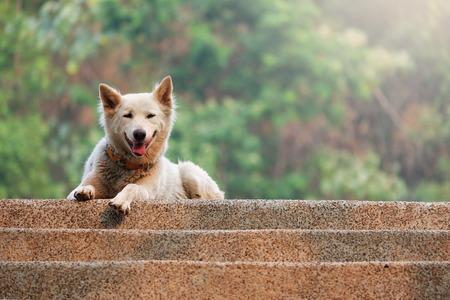 canny: Fluffy White Dog