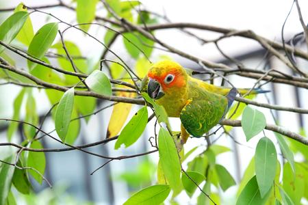 Lovely Sun Conure bird photo