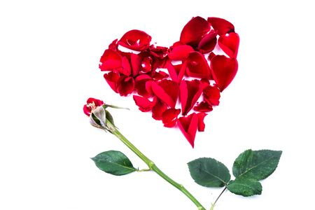 Red heart from the rose leaves in white background Stock Photo