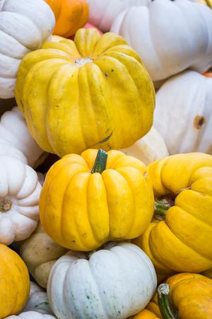 mini farm: Colorful Mini Pumpkins Stock Photo