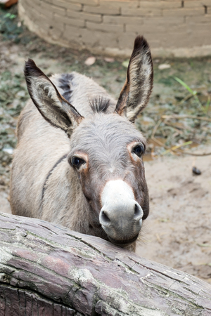 stall: gray donkey in the stall Stock Photo