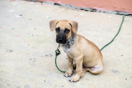 enchain: lovely puppy sitting alone Stock Photo