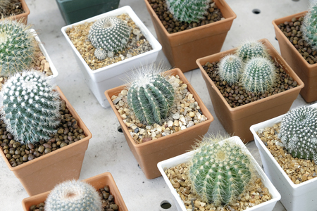 cactus: Variety of small beautiful cactus in the pot