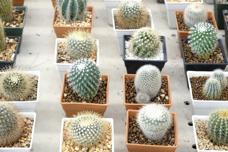 cactus botany: Variety of small beautiful cactus in the pot