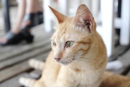 outcast: Orange cute cat - soft focus Stock Photo