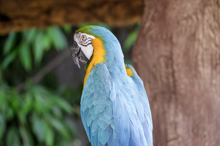 perch: Cute macaw parrot on the perch Stock Photo