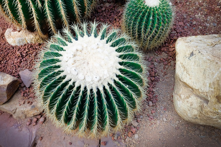 thorn: Cactus with sharp thorn