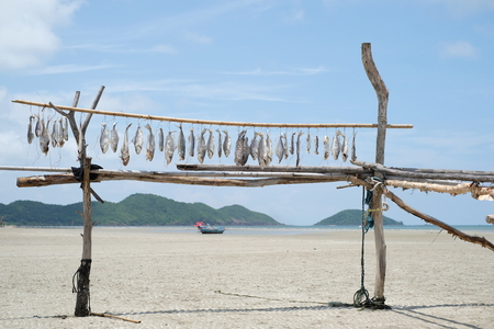 stockfish: Fish hanging on the branch for drying - Fisherman lifestyle - soft focus Stock Photo
