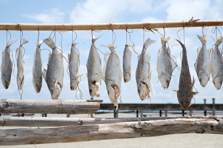 Fish hanging on the branch for drying - Fisherman lifestyle - soft focus Banco de Imagens