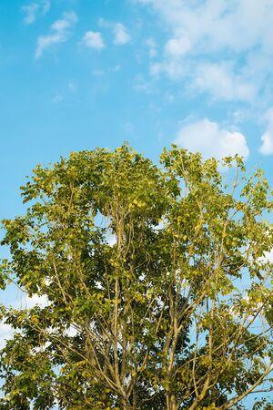 Half tree and sky background Stock Photo