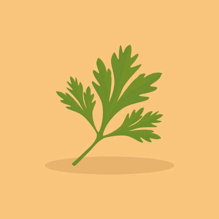 cilantro: abstract Cilantro on a light orange background Illustration