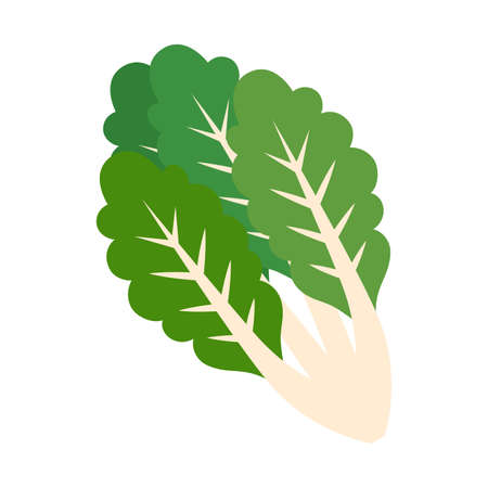 Isolated chard icon. Healthy food - Vector illustration
