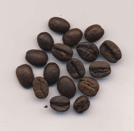 large bean: Coffee Beans on a light background
