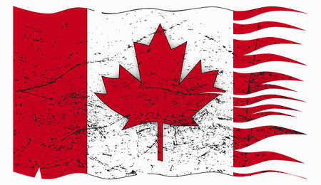 grunged: A wavy and grunged Canadian flag design isolated on a white background