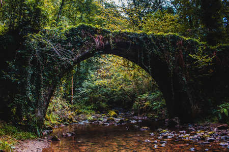 Isolated forest bridge with moss.